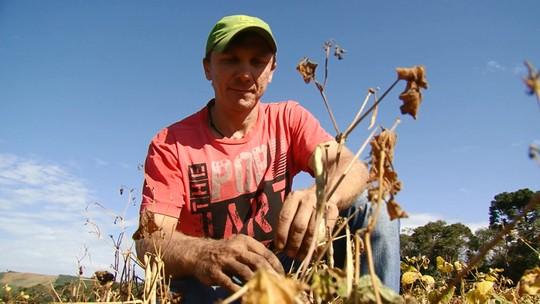 Falta de chuvas compromete produtividade da segunda safra de feijão no Paraná