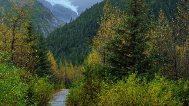 Biomas do Hemisfério Norte, como a tundra e a taiga, também guardam espécies e processos biológicos com pouca interferência humana (Foto: Getty Images via BBC)