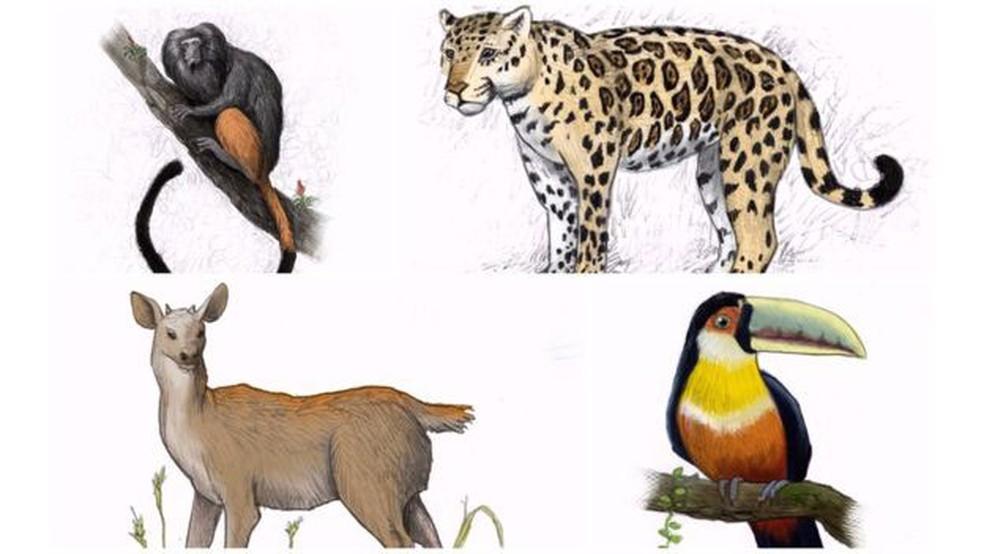 Variedade da flora nativa atraía para a região um conjunto igualmente diverso de animais, entre os quais onças-pintadas, tucanos-de-bico-verde, micos-leões-pretos e veados-catingueiros (Foto: Leandro Lopes de Souza /BBC)