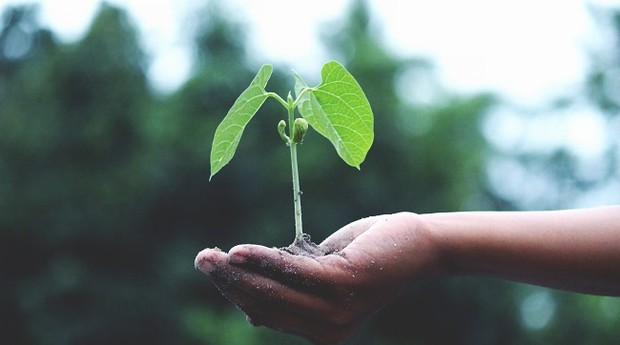 Sustentabilidade; crescimento (Foto: Pexels)
