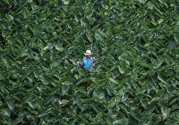 Sustentabilidade: Monoculturas criadas para alimentar animais diminuem a biodiversidade e aumentam a emissão de gás carbônico (Foto: Getty Images)