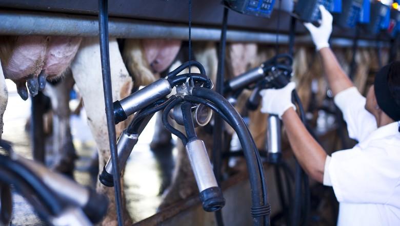 leite-ordenha-mecanica-vaca (Foto: Valdemir Cunha/Ed. Globo)