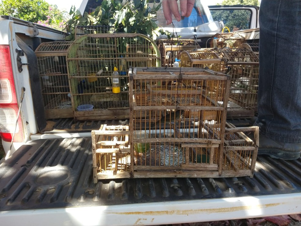Animais foram apreendidos em cativeiro irregular — Foto: CIPPA Porto Seguro