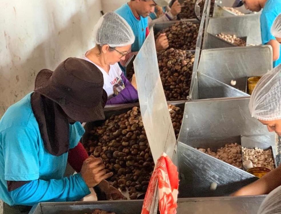 Cooperativa de produtores de caju onde Fernanda compra as castanhas para fabricação do caju cremoso — Foto: Qaju/Divulgação