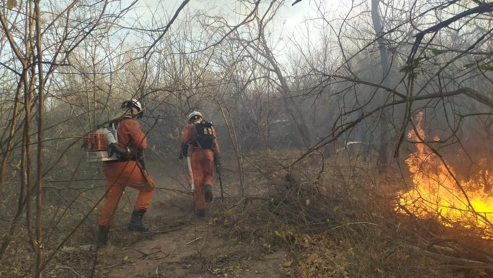 Bombeiros trabalham no combate aos incêndios em vegetação no interior da Bahia — Foto: Divulgação/Corpo de Bombeiros