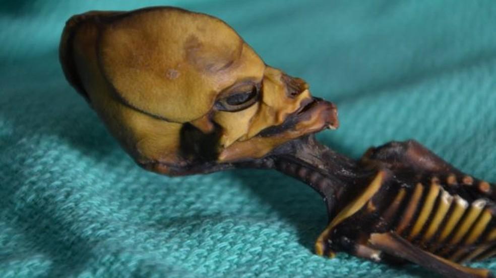 O esqueleto da múmia Ata tem 13 centímetros, mas ossos que aparentavam ser de uma criança de 6 anos (Foto: Emery Smith)