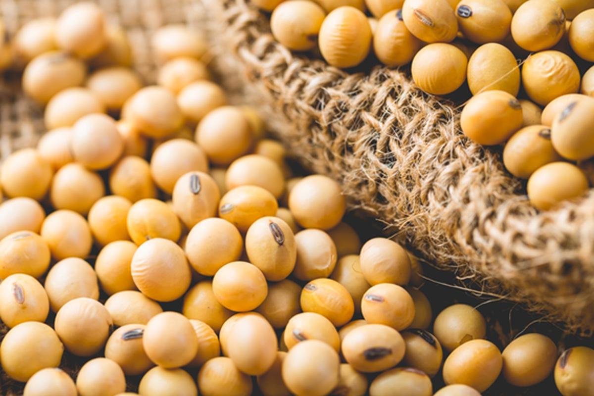 Valor das exportações de RR cresce mais de 1.000% em um mês alavancado pela soja