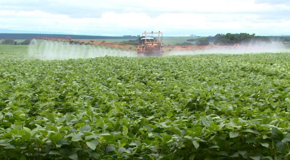 Mudança na fórmula da ração pode contribuir para a diminuição dos gastos com irrigação em plantações de grãos — Foto: Wilson Aiello/EPTV