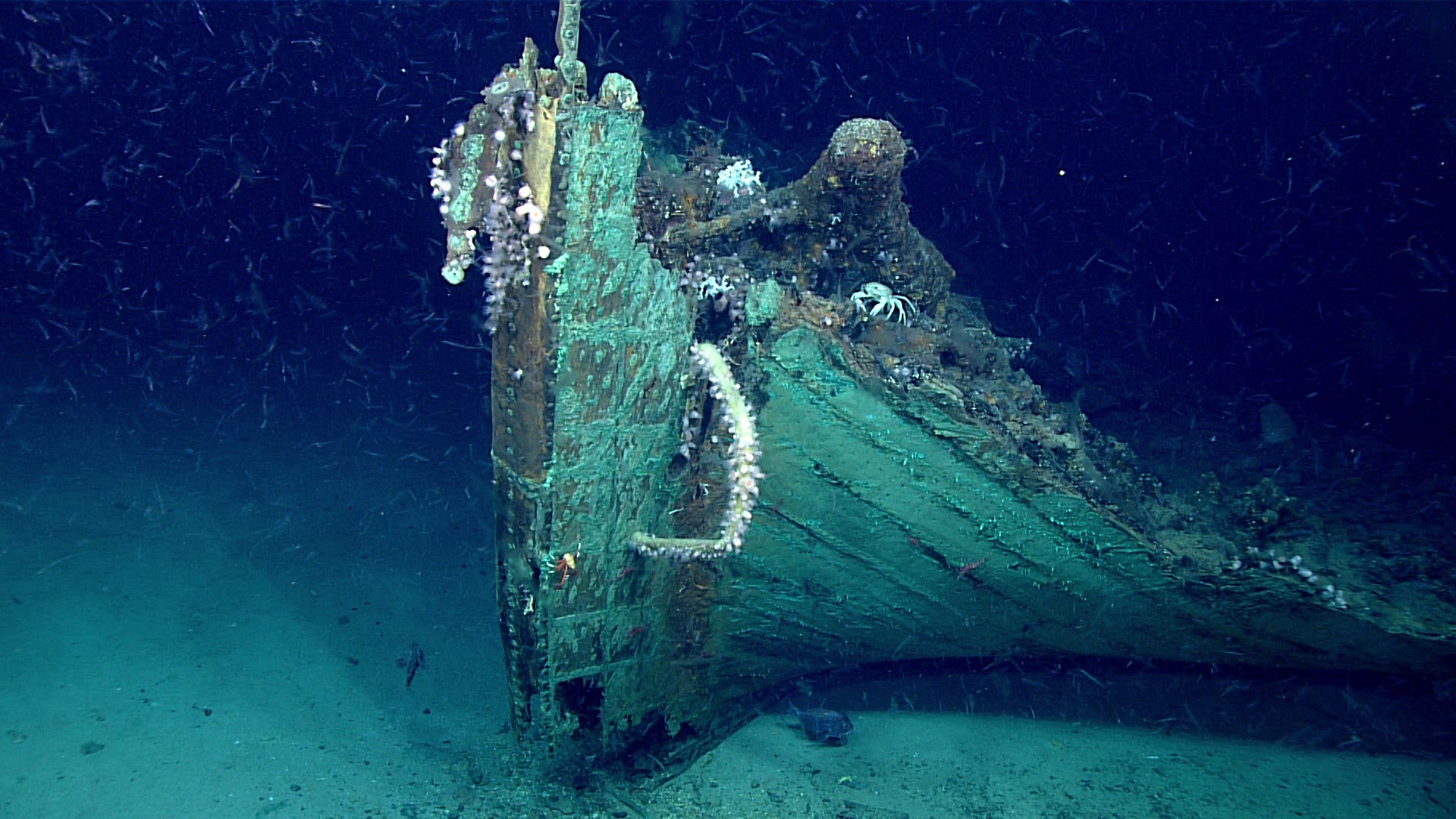 A close-up view of the bow. Marine life is prevalent on the wreck except on the copper sheathing which still retains its antifouling ability to keep the hull free of marine organism like Teredo navalis (shipworm) that would otherwise burrow into the wood  (Foto: NOAA)