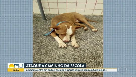 Dona do cão que atacou crianças em Queimados diz que ele cavou buraco e fugiu