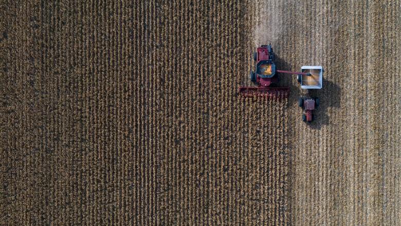 Colheita de milho 23/02/2021 (Foto: Adrees Latif/Reuters)