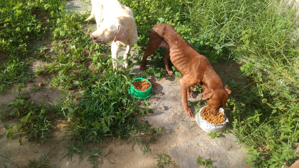 Vizinhos conseguiram entrar no local e alimentar os animais antes de acionarem a polícia — Foto: Arquivo pessoal