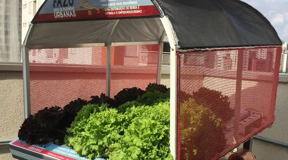 Projeto Fazu promove a instalação de fazendinhas urbanas para plantação de hortaliças sem agrotóxicos (Foto: Divulgação)