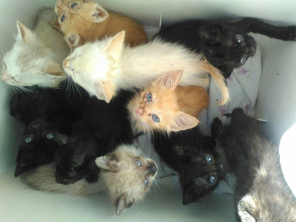 Ana cuida de 35 gatos resgatados da rua em sua casa — Foto: Arquivo Pessoal