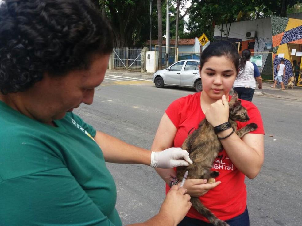 -  Vacinação antirrábica ocorre em Ituiutaba e Uberlândia  Foto: Divulgação