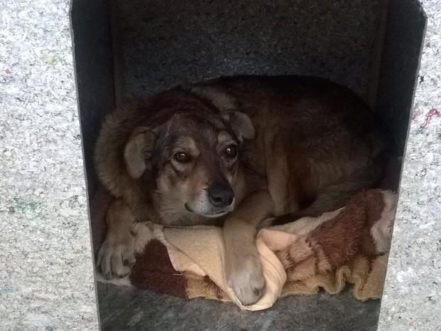 Segundo Bruna, os próprios moradores já colocaram cobertores nas casinhas (Foto: Bruna Uncini/Divulgação)