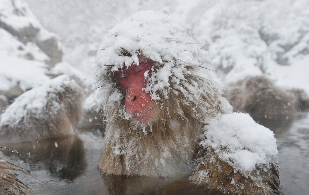 Macacos da neve tomam banho ao ar livre em fonte termal no Parque do Macaco Jigokudani na cidade de Yamanouchi, Nagano, Japão. (Foto: Kazuhiro Nogi/AFP)