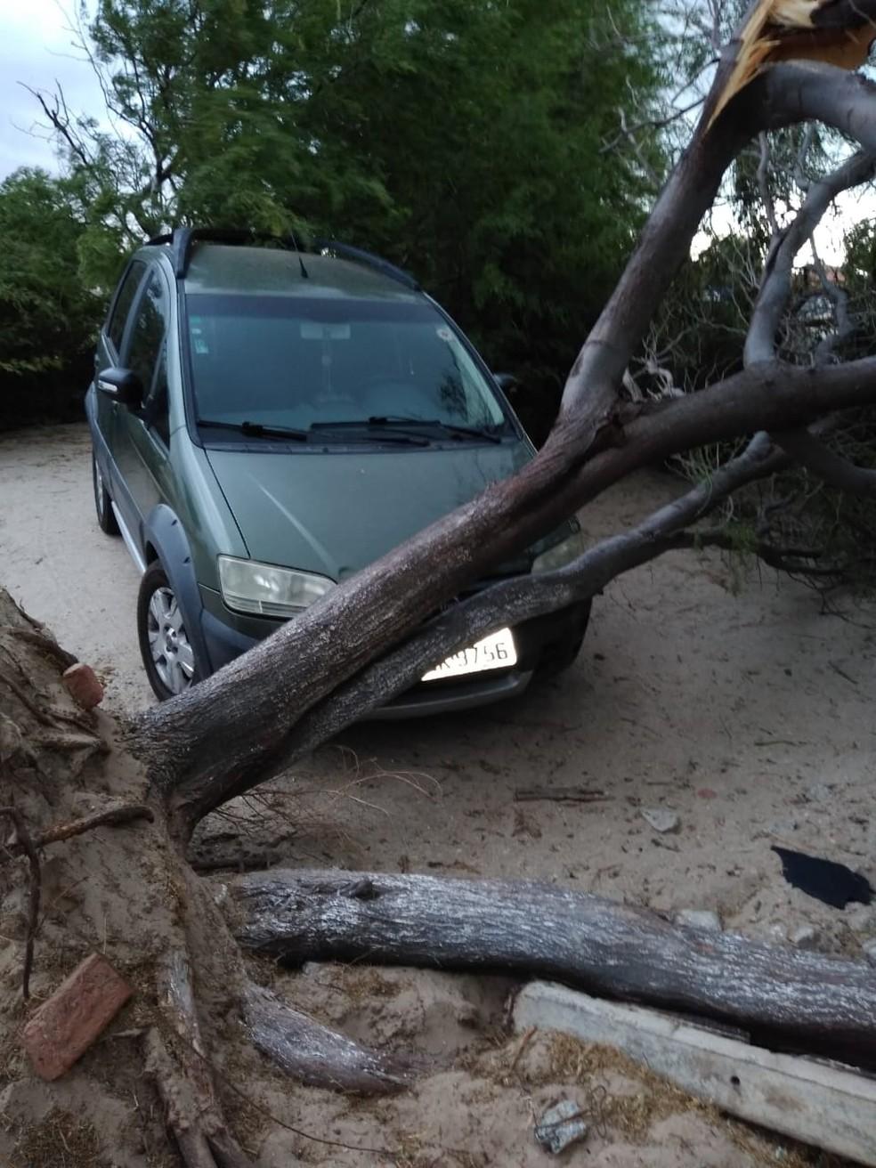 Árvore caiu sobre carro após ventania em Macau, RN — Foto: Denilson Luiz