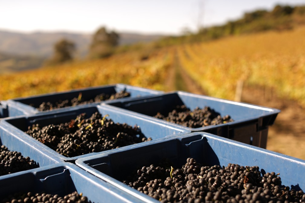 Vinícola Guaspari: agenda para que visitantes conheçam a vinícola está esgotada até o fim de 2020. — Foto: Divulgação