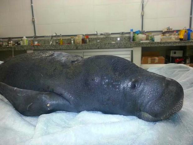 Animal foi resgato com lesões pelo corpo (Fot Séfora Antela/Ampa)