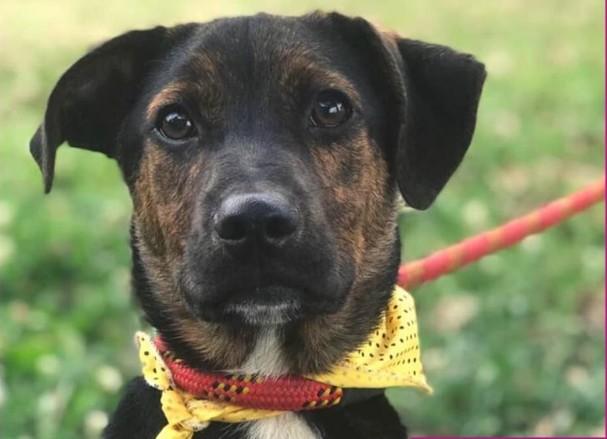 Rede de Proteção Animal de Curitiba faz live para adoção de cães e gatos no sábado (5)