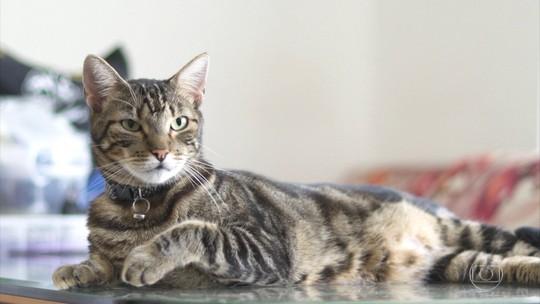 Globo Repórter investiga o mundo enigmático dos gatos e o amor pelos felinos