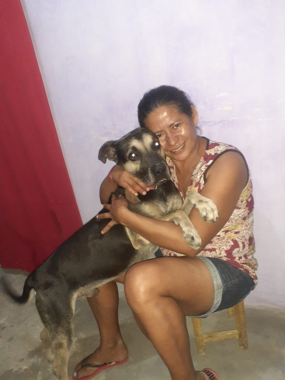 Cão que ficou um mês na porta de casa após dona se mudar do litoral de SP viaja cinco dias para reencontrar tutora no CE