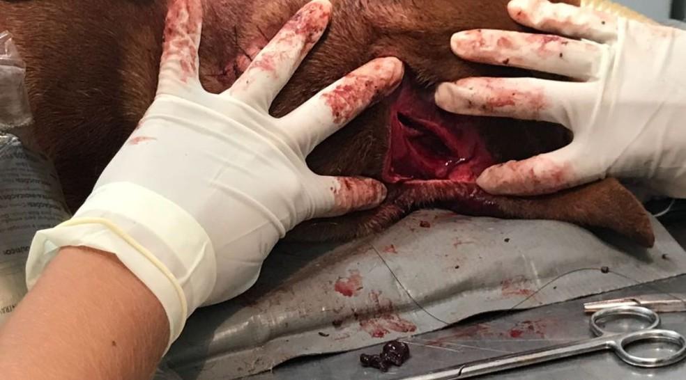 Corte feito por facão pelo dono do pitbull, em Campo Grande (MS) (Foto: PMA/Divulgação)