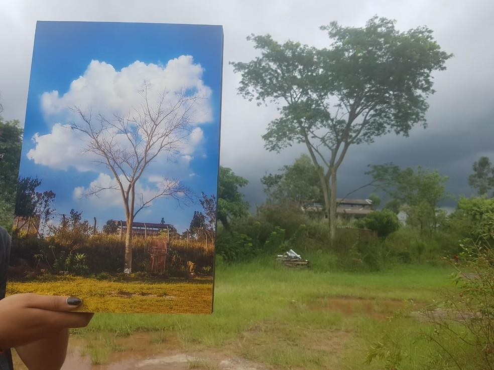 Éder fez um quadro com a foto da árvore atrás de casa — Foto: Eder Magalhães/Arquivo pessoal