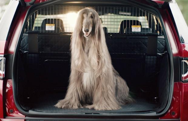Land Rover lança pacotes de opcionais para animais de estimação (Foto: Divulgação)