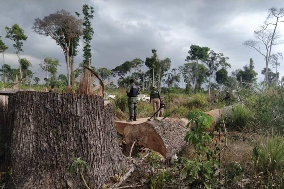 Apreensão de madeira em operação da Semas, em 2021 — Foto: Agência Pará /Reprodução