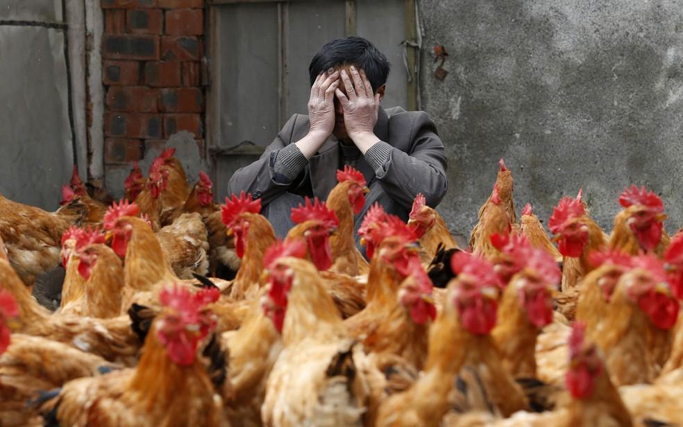 Dono de uma granja em Yuxin, na província chinesa de Zheijang, lamenta o surgimento do vírus H7N9, uma nova variação da gripe aviária. O mercado granjeiro local foi seriamente afetado após a divulgação de mortes pela gripe. (Foto: William Hong/Reuters)