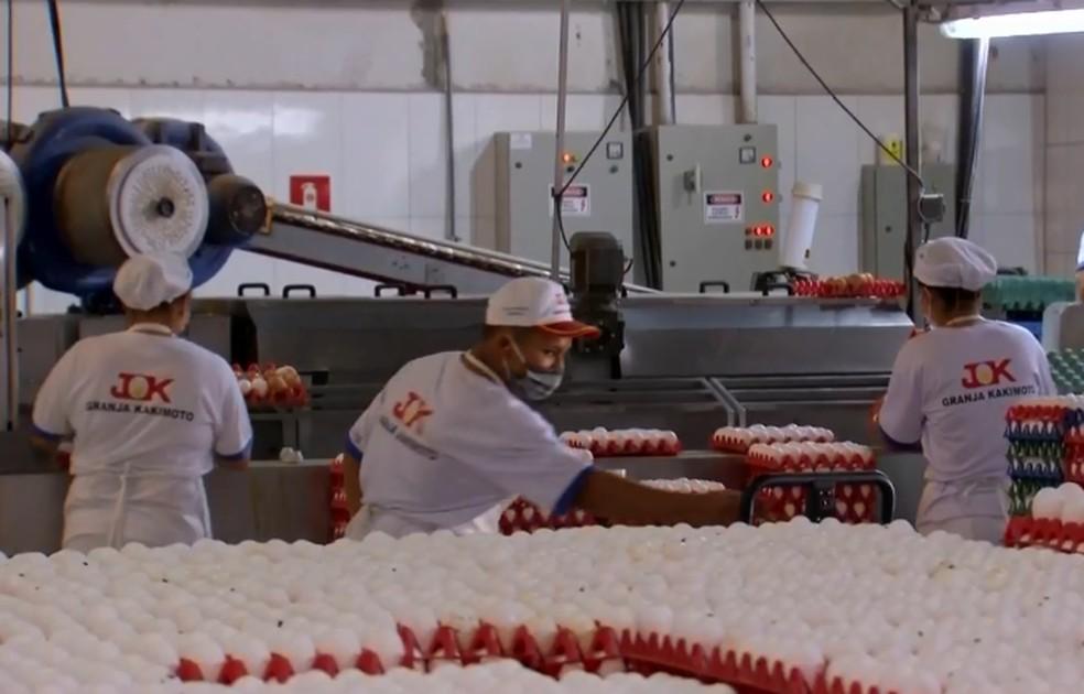 Donos de granjas apostam nas festas de fim de ano para recuperar vendas em Bastos — Foto: TV TEM/Reprodução