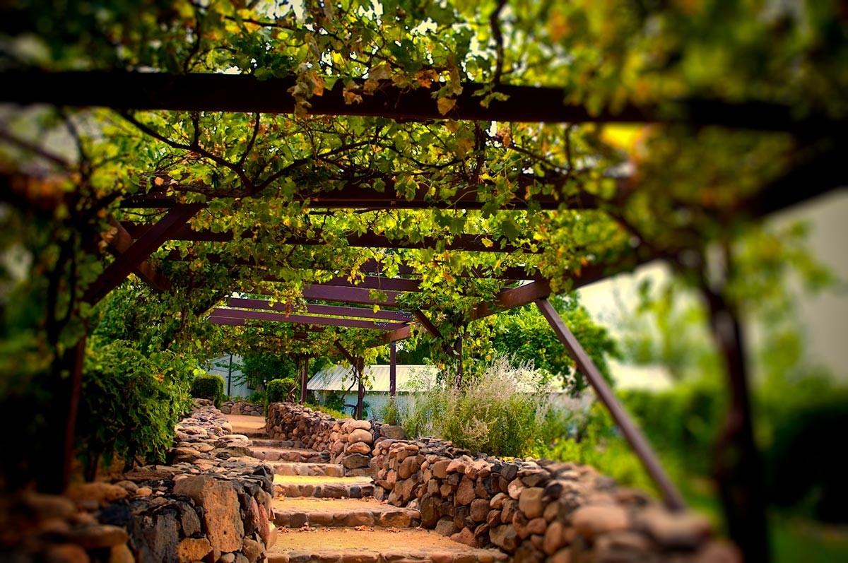 Roteiro do Vinho (Foto: Divulgação)