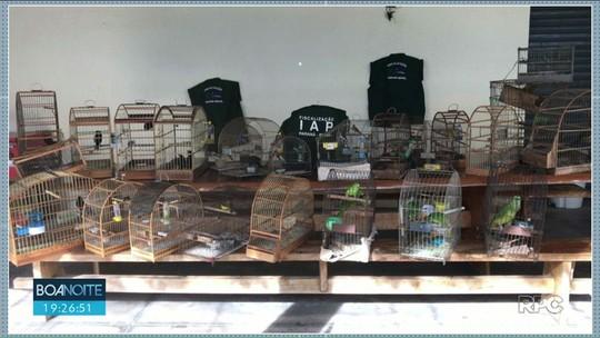 IAP resgata 34 pássaros silvestres em seis cidades do noroeste do Paraná