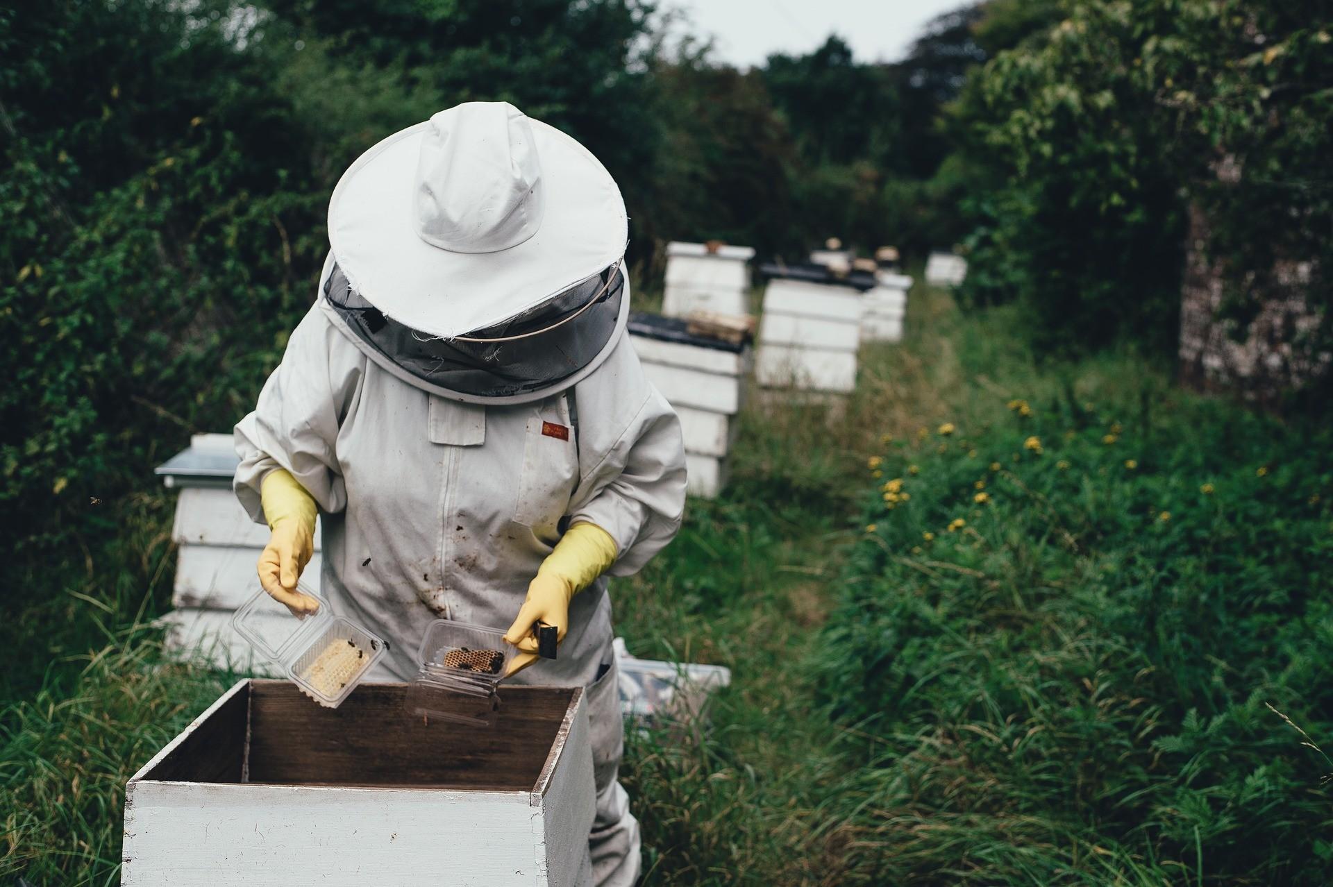 Trabalhador em apiário (Foto: Pixabay)