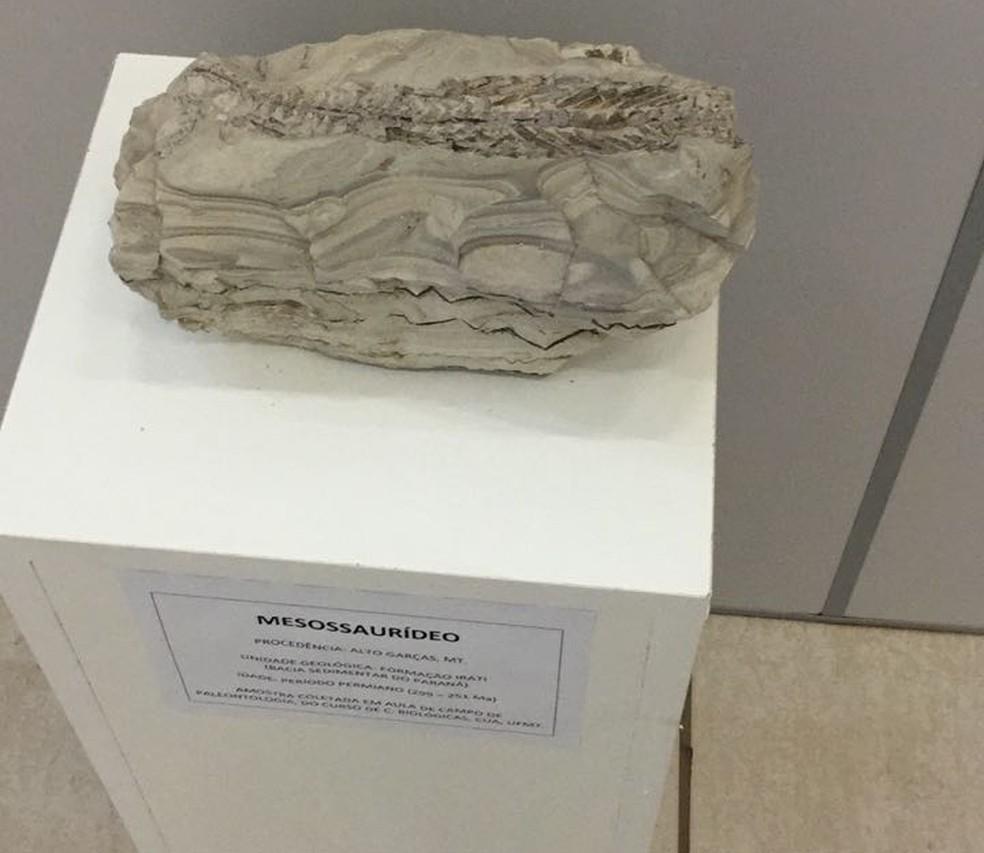 Museu foi aberto após oito anos de andamento do projeto (Foto: Paula Barros/ Arquivo pessoal)