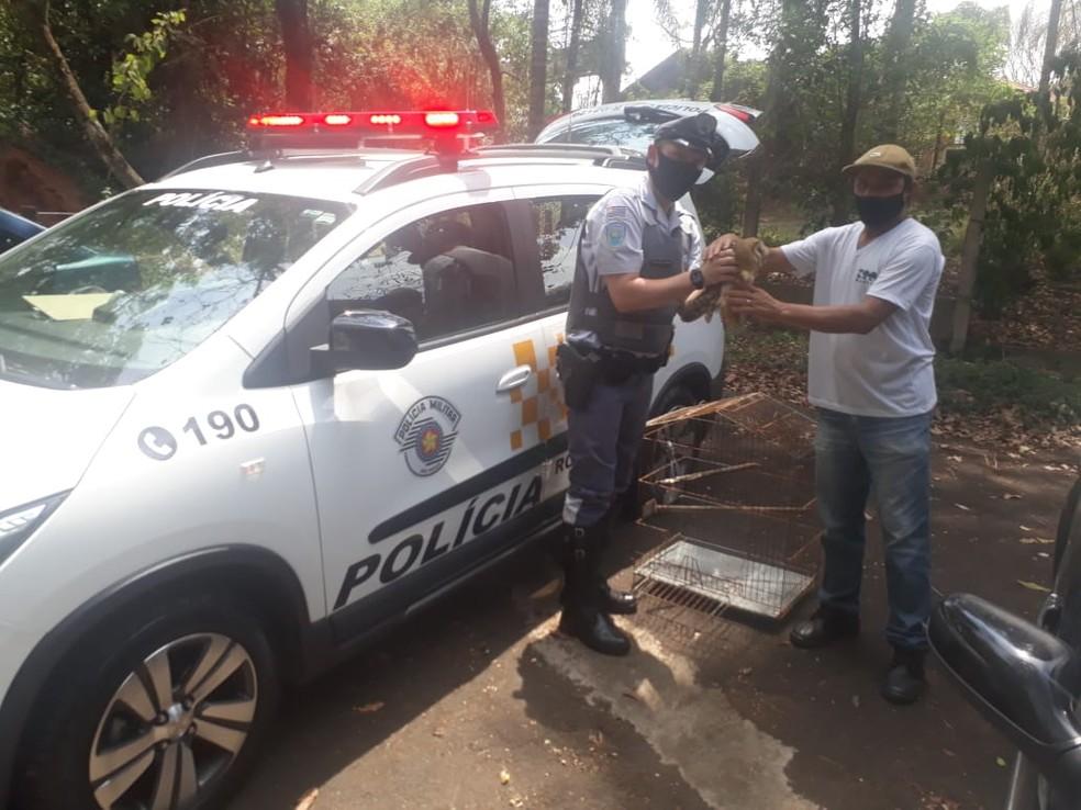Coruja estava com as pernas lesionadas e será devolvida à natureza — Foto: Polícia Rodoviária/Divulgação