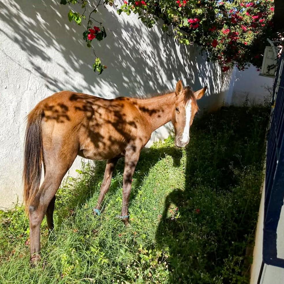 Cavalo estava dentro de unidade de saúde da prefeitura de Paulista localizada no bairro de Maranguape II — Foto: CRO-PE/Divulgação