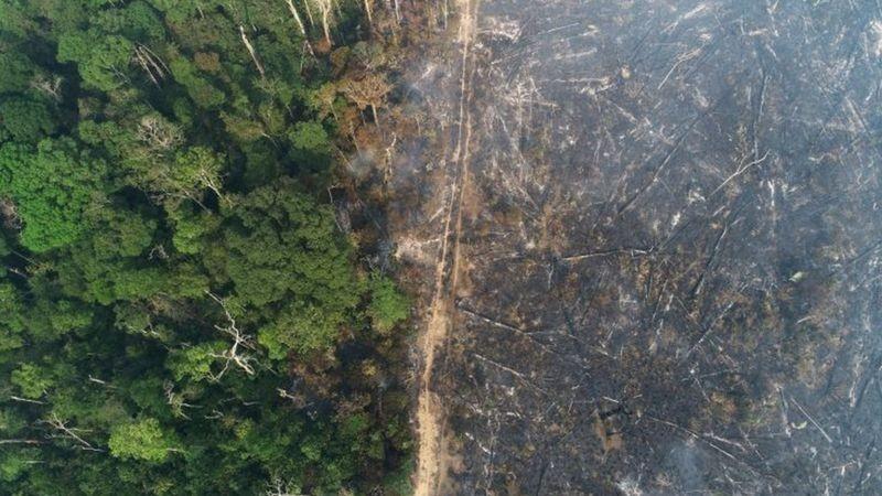 Justiça determina retirada de gado de áreas embargadas por desmatamento ilegal no Amazonas