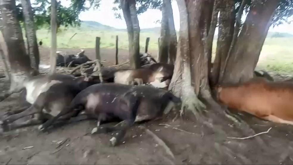Bois estavam embaixo de uma árvore quando morreram eletrocutados, no ES — Foto: Reprodução/ TV Gazeta