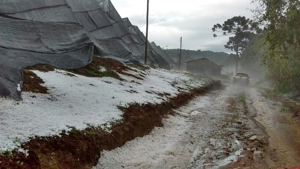 -  Lona de proteção de plantação de morango ficou destruída em Senador Amaral  MG   Foto: Reprodução/Redes Sociais