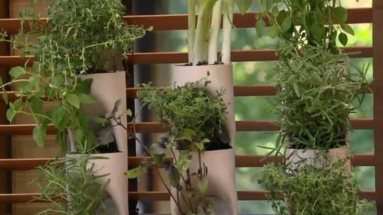 Jardinagem: 4 dicas de como criar, cultivar e cuidar da horta em casa