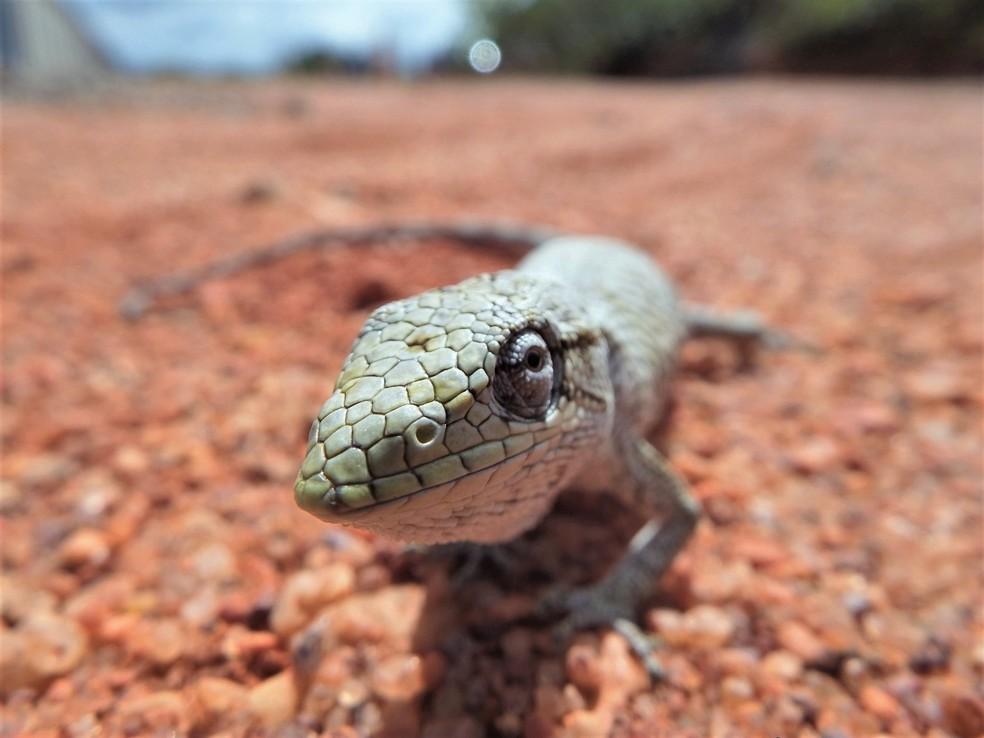 A fotografia e observação das espécies ajuda o biólogo a aperfeiçoar os conhecimentos sobre a fauna — Foto: Pedro Medeiros/VC no TG