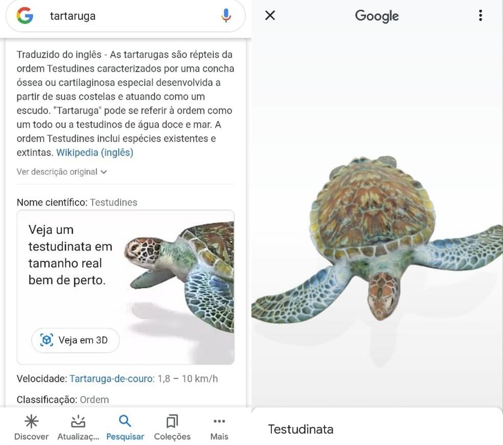 Vários animais já estão disponíveis em 3D na busca — Foto: Reprodução/Clara Fabro