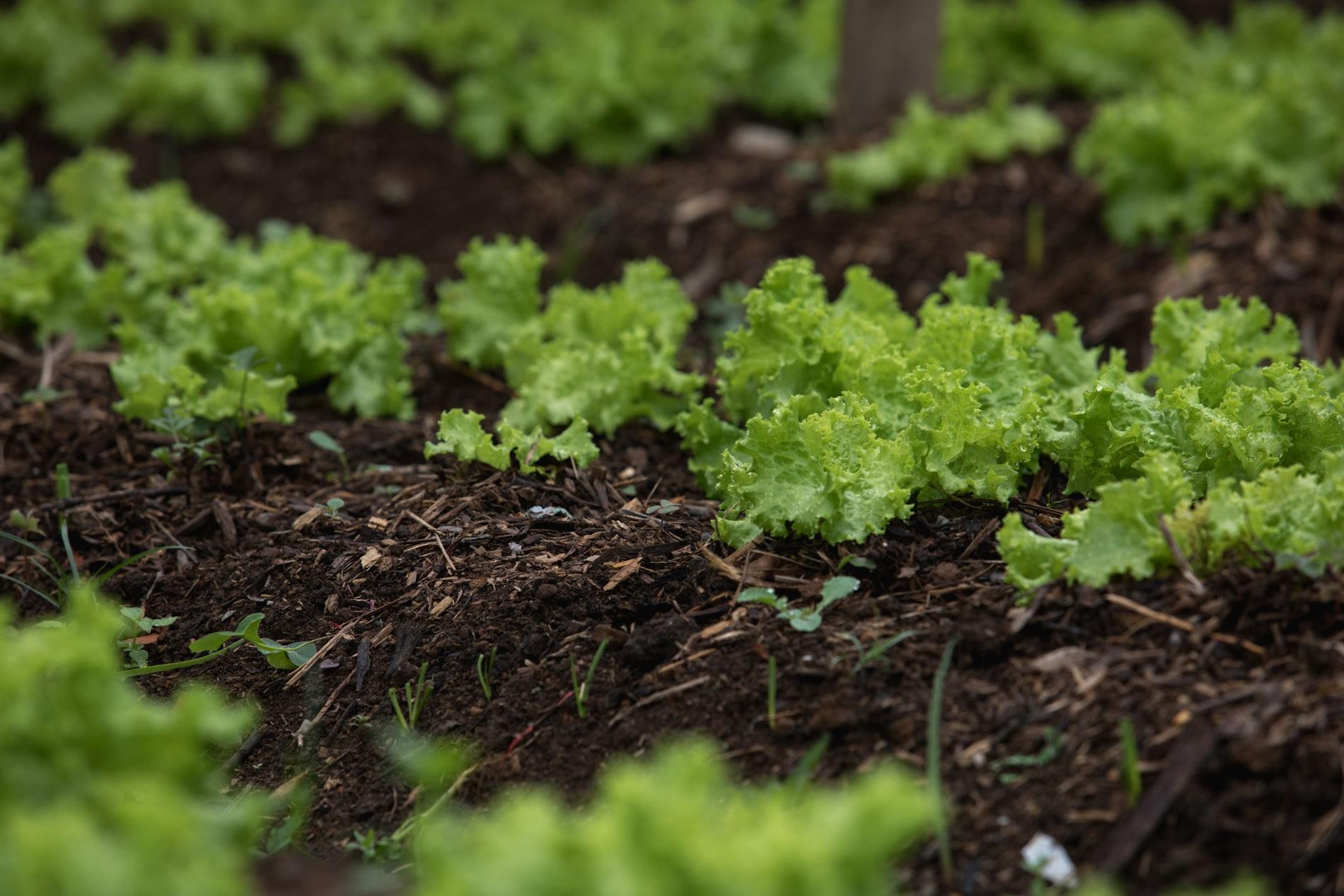 Câmara analisa projeto que libera plantio de culturas agrícolas em áreas urbanas de Piracicaba - Noticias