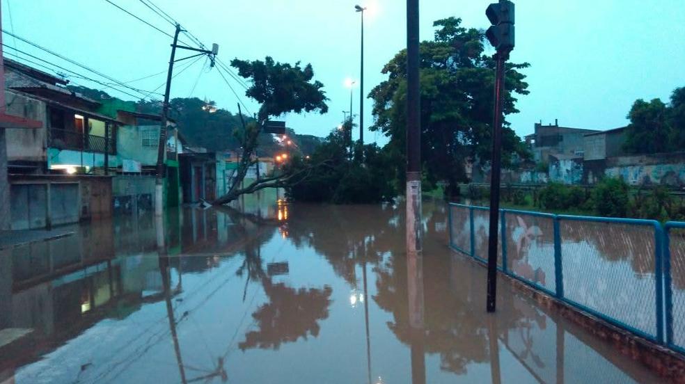 Árvores caíram com o temporal que atingiu Macaé (Foto: Renan Gouvêa/Inter TV )