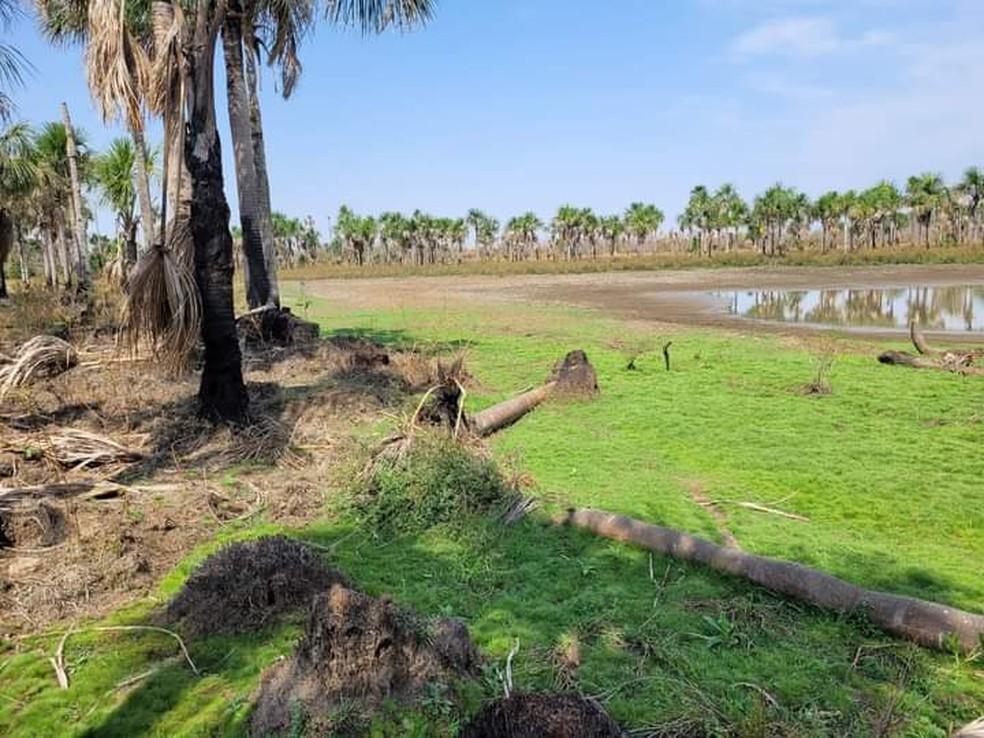 Área de 7 Lagoas, nascente do Rio Paraguai, em MT — Foto: Divulgação