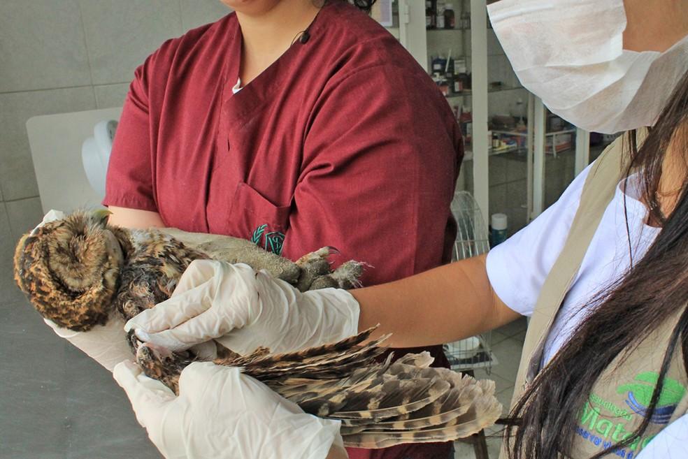 Trabalhos de reabilitação são essenciais para os animais apreendidos — Foto: Divulgação/Associação Mata Ciliar