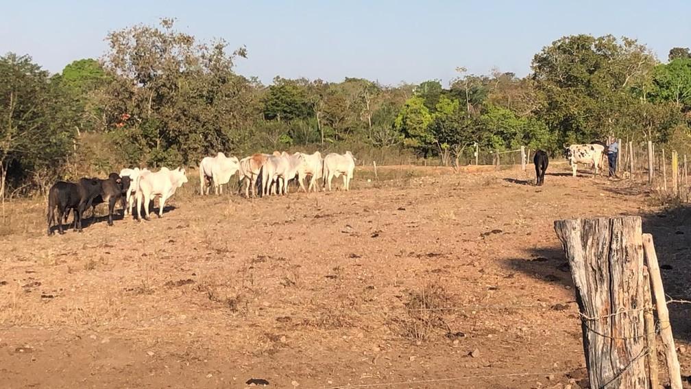 Três homens foram presos com gado roubado de prefeito em Nossa Senhora do Livramento (MT) — Foto: Polícia Civil de Mato Grosso/Assessoria